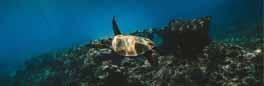 """""""Com actuar si albires una tortuga marina. Caretta a la vista"""", en el marc de la jornada """"Conservem allò que coneixem"""""""