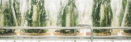 BAC 2018: Congrés Anual de Biotecnologia